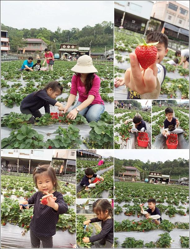 picking strawberry
