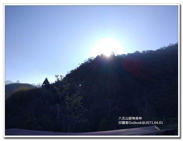 八五山甜柿森林-026.jpg