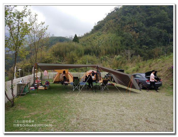 八五山甜柿森林-003.jpg