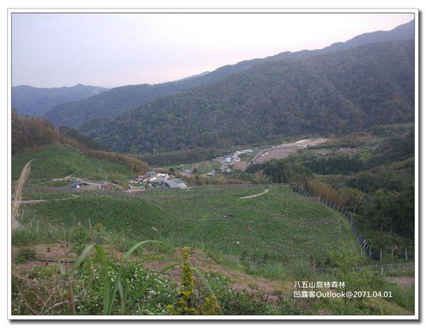 八五山甜柿森林-046.jpg