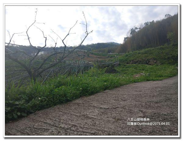 八五山甜柿森林-049.jpg