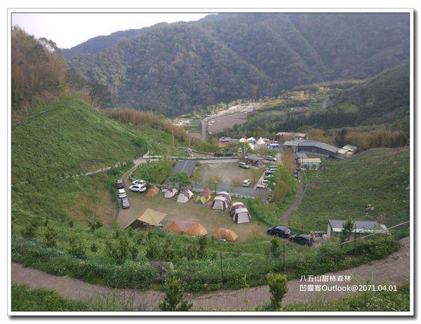 八五山甜柿森林-050.jpg