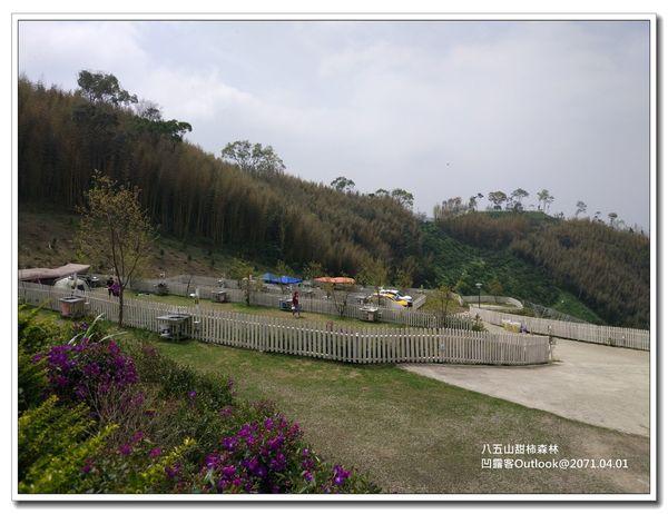 八五山甜柿森林-006.jpg