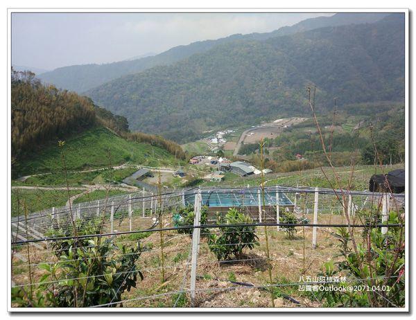 八五山甜柿森林-007.jpg